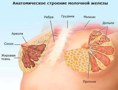 pokrasnenie-soska-molochnoy-zhelezi