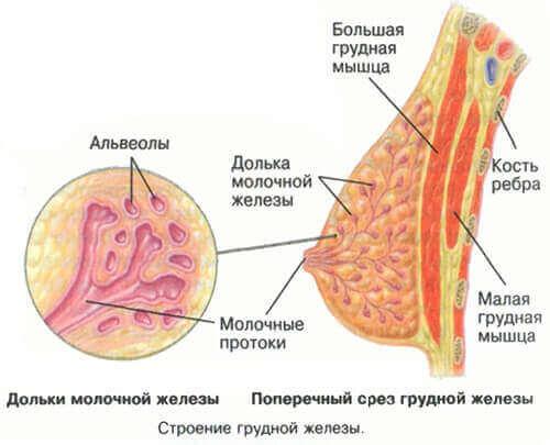 Тянет грудь