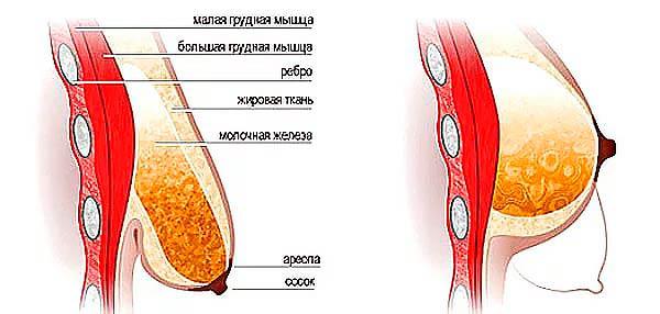 На сколько лет делается силиконовая грудь